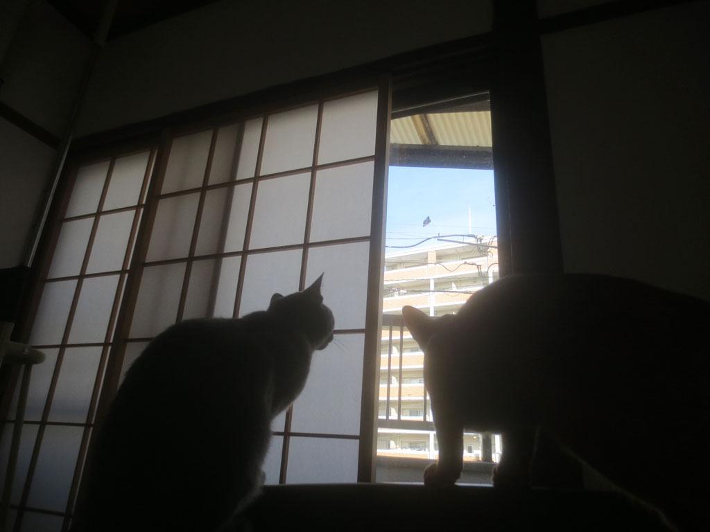2にゃんで鳥を見ています。