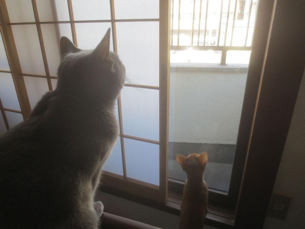 アビのすけも一人前に猫です。