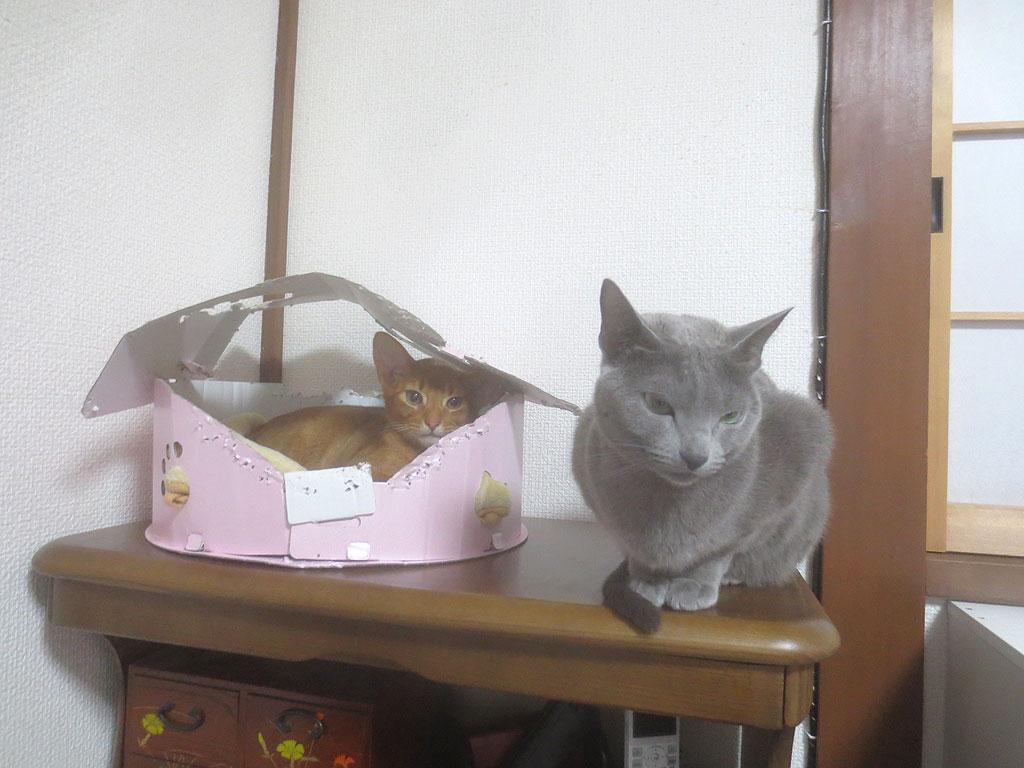 ロシ子とアビが近い場所にいます。