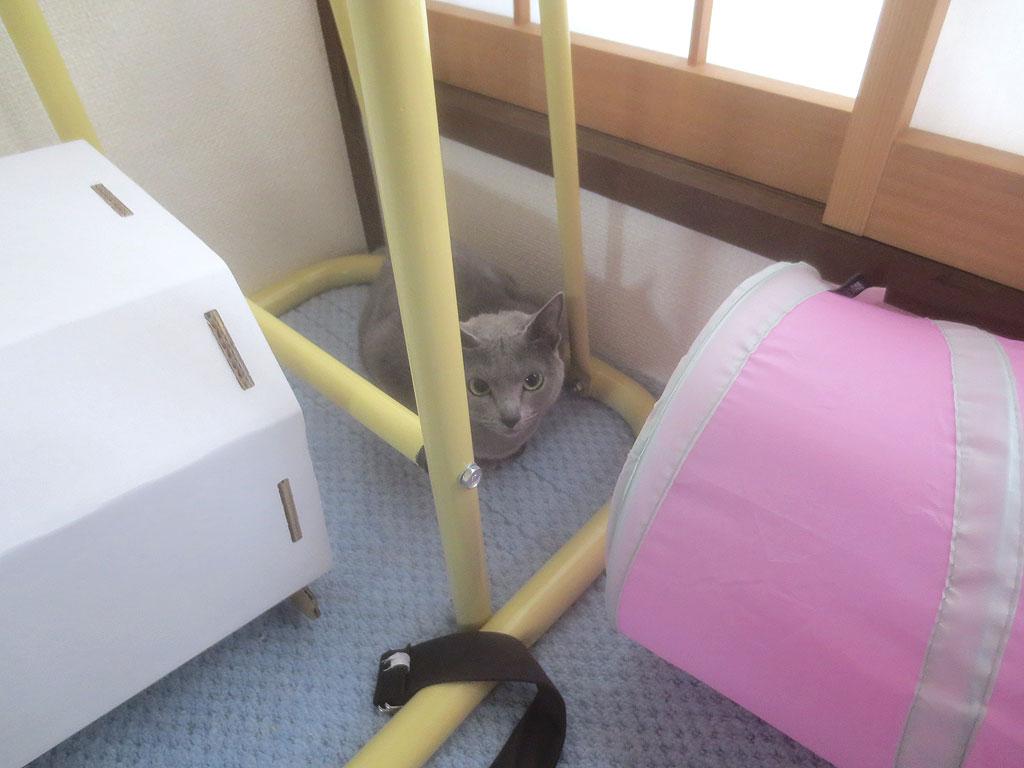 隠れてしまったロシ子ちゃん。