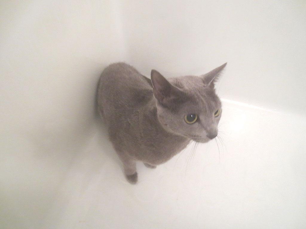 ロシ子がお風呂に到着です。