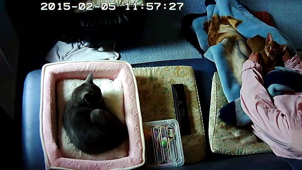 Webカメラに敏感なアビのすけ。