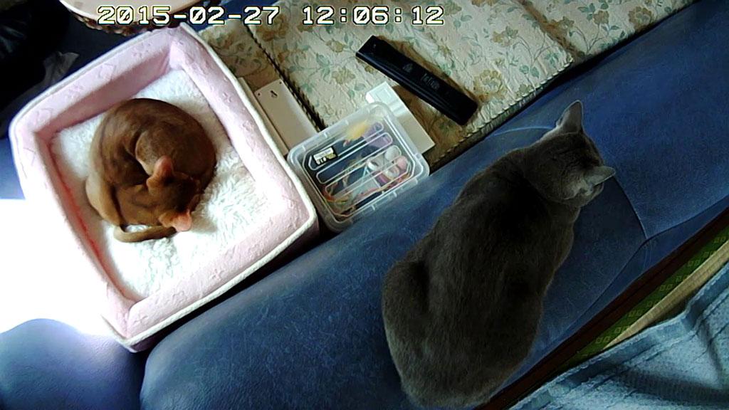 離れて寝ているロシ子とアビ。