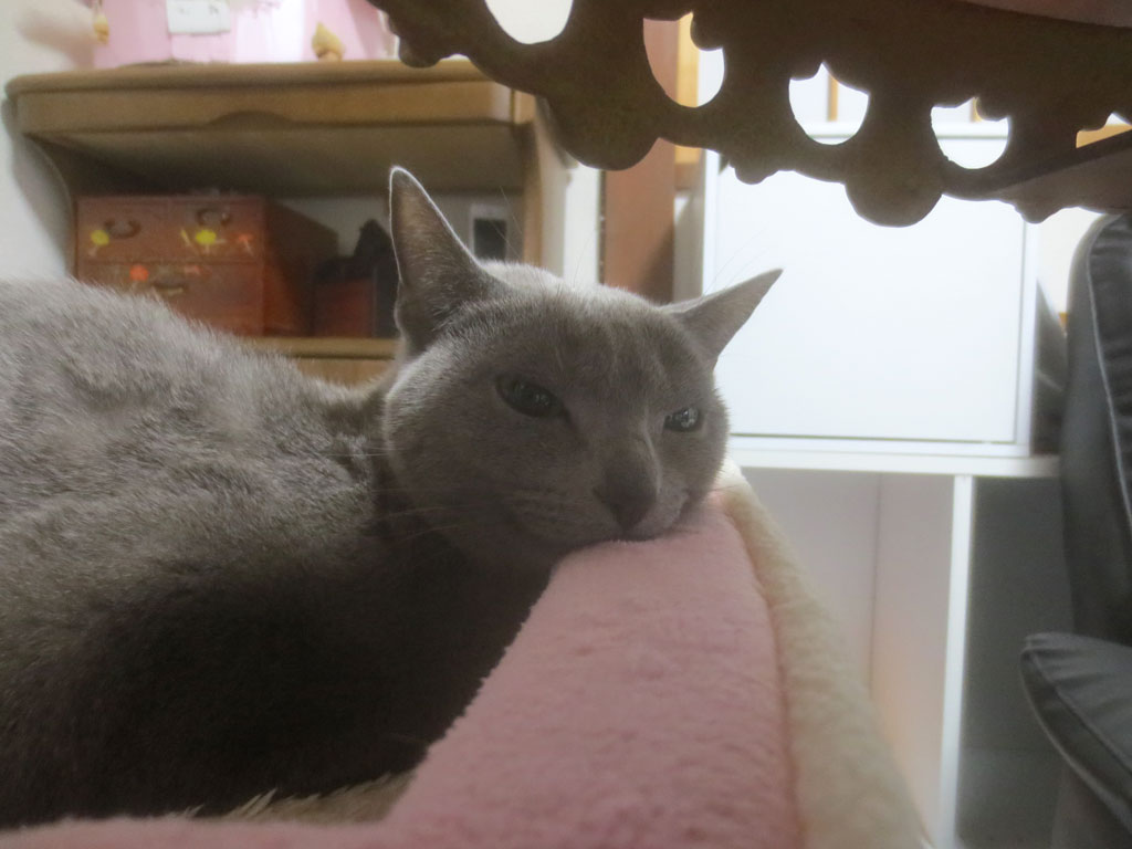 眠そうなロシ子の顔。