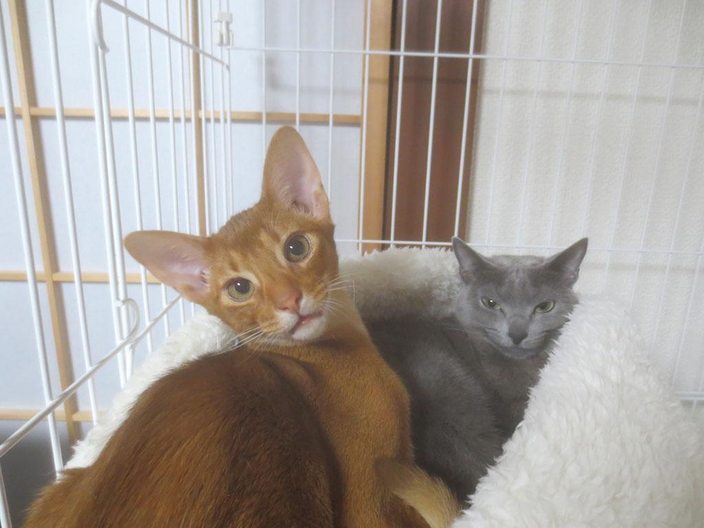 一緒に猫ベットにいる2にゃん。