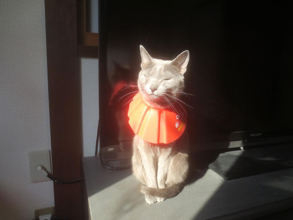 朝陽を浴びるロシ子ちゃん。