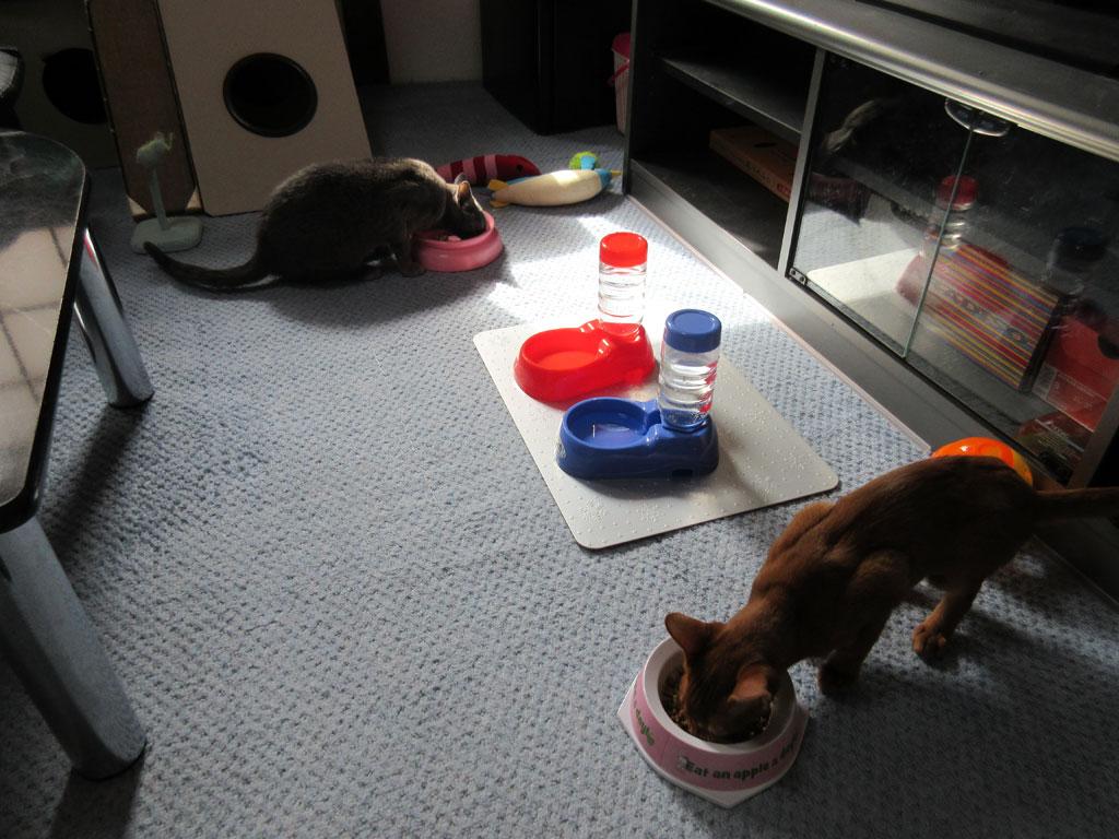 にゃんずの朝ご飯の風景。