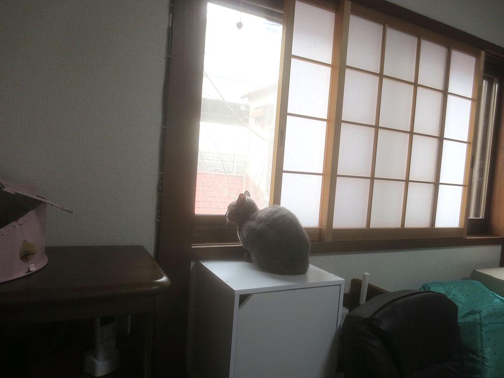 外を見るロシ子ちゃん。