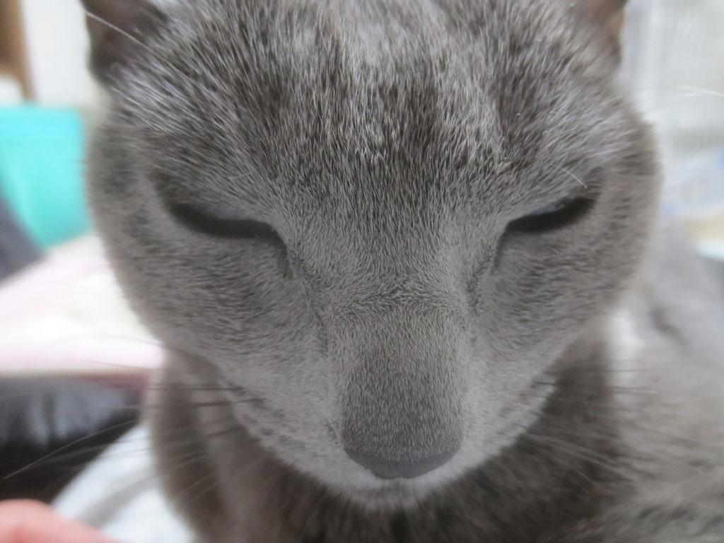 薄目を開けるロシ子ちゃん。
