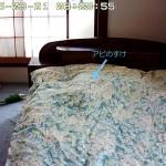 2度寝をするロシ子とアビのすけ。