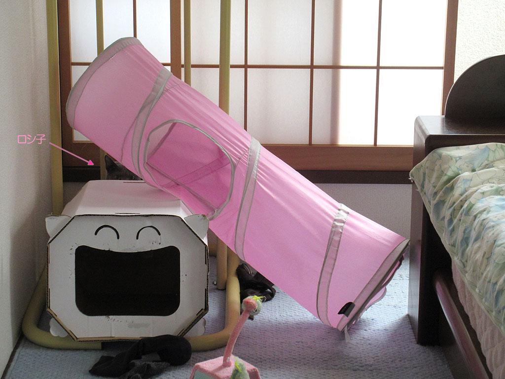 昨日もロシ子は隠れていました。