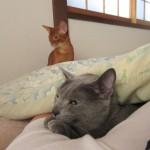 ロシ子との添い寝は最高です。