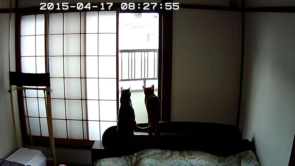 ロシ子とアビが揃って座ってる。