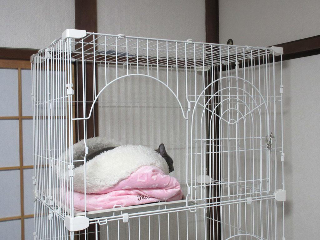 変な体勢で寝てるロシ子。