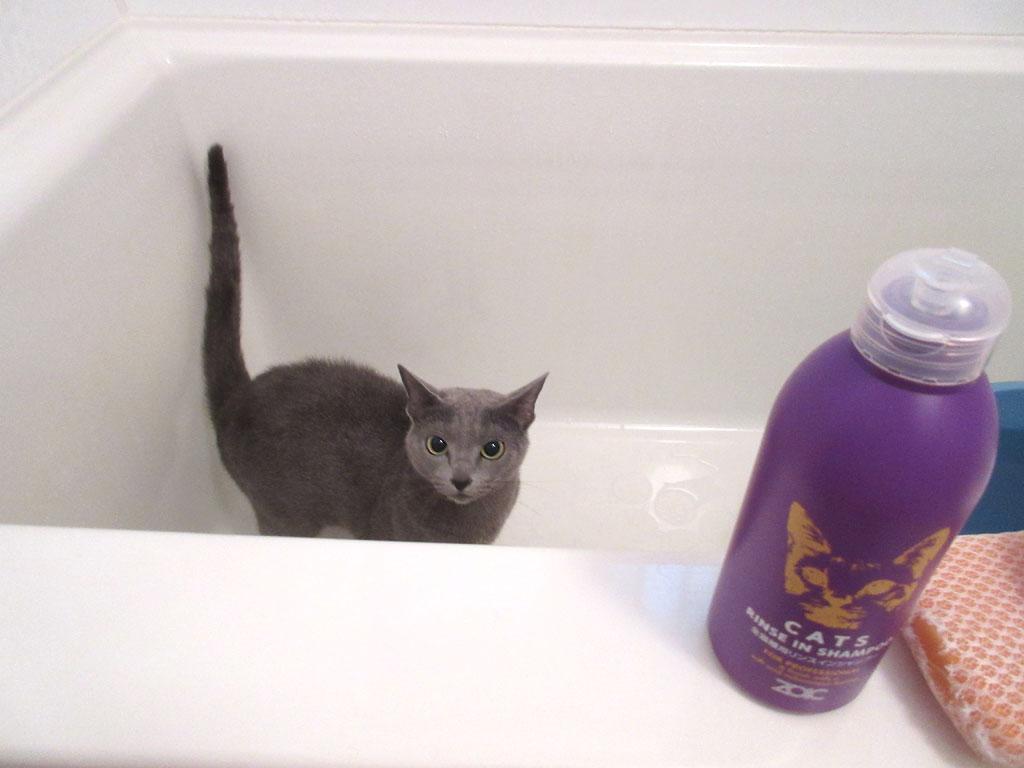 浴槽にロシ子を連れて来ました。