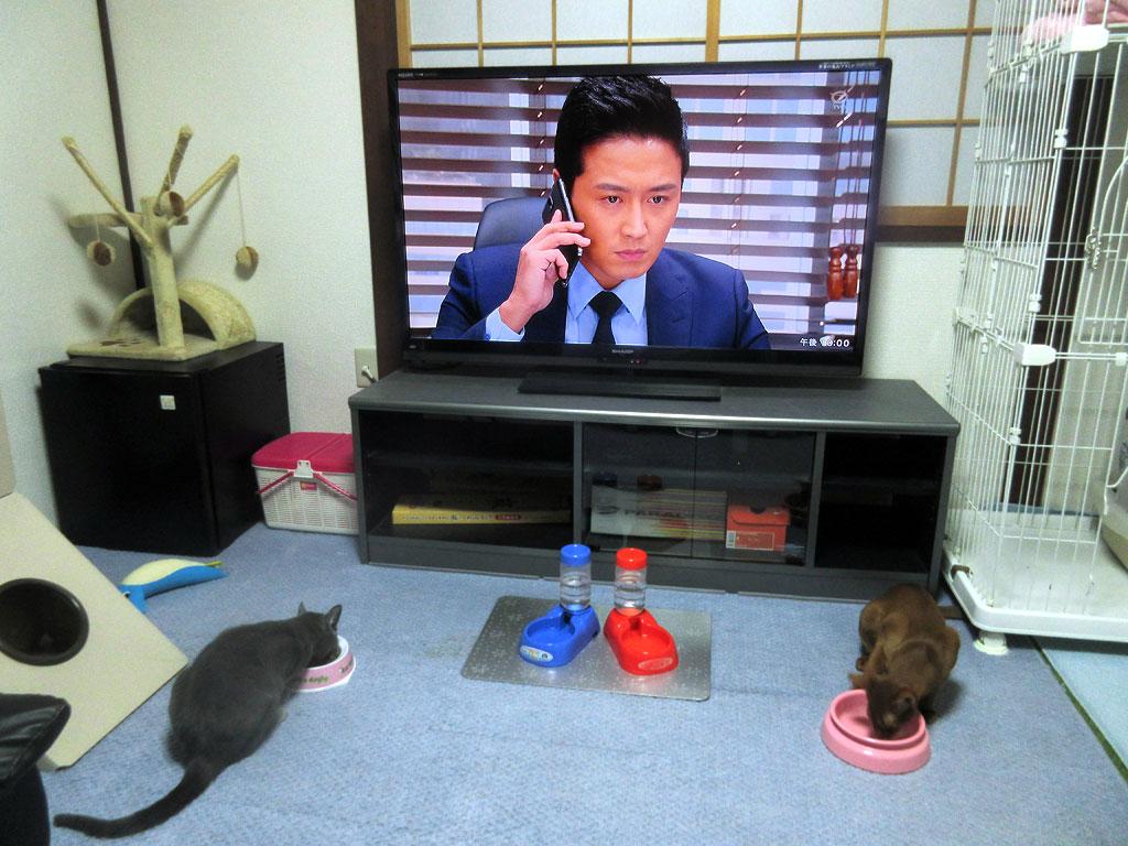 得ベルご飯を食べる我が家の猫。