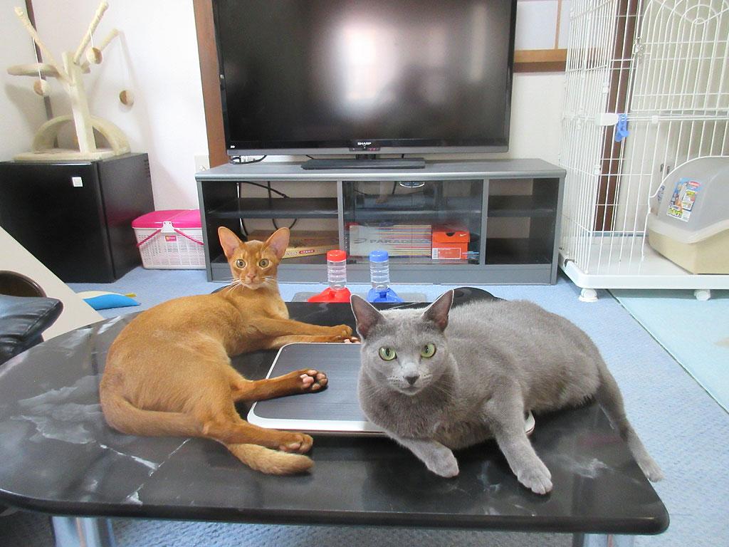 仲良くなっている?猫たち。