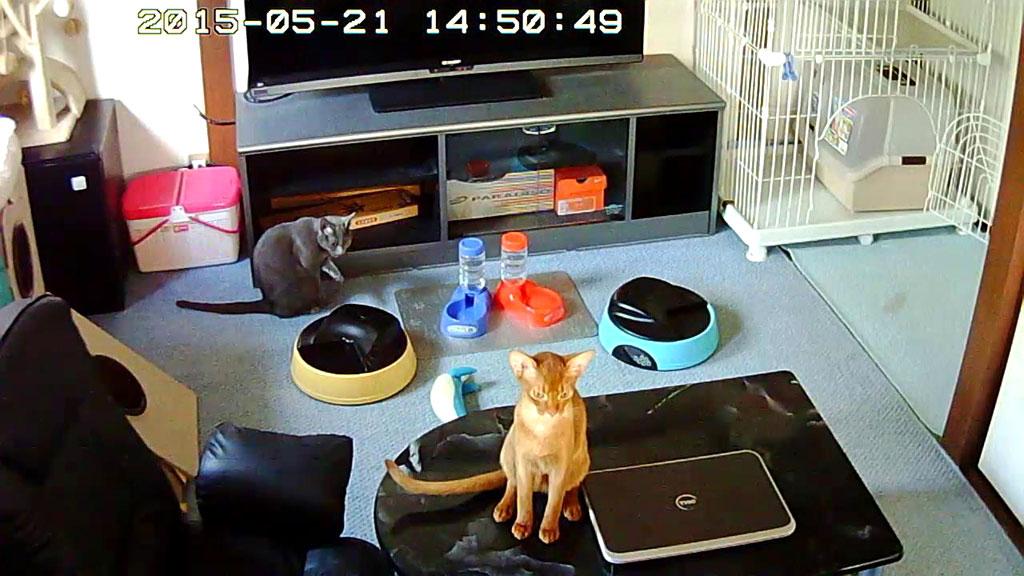 お昼ご飯前の猫ちゃんたち。