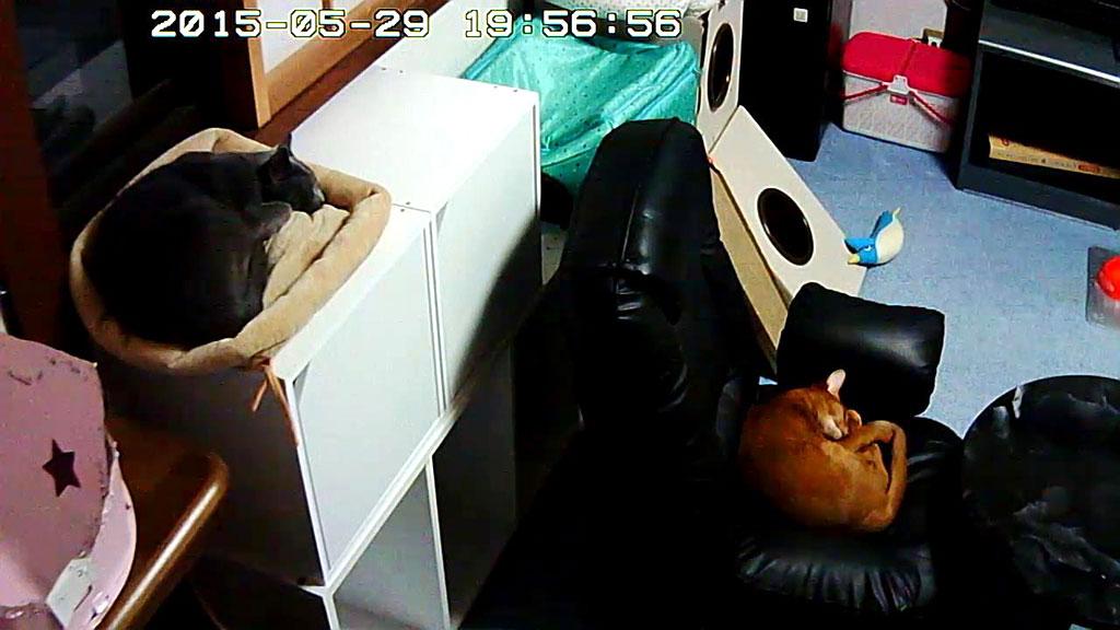 シンクロしている我が家の猫たち。