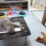 グテッとしてる我が家の猫たち。