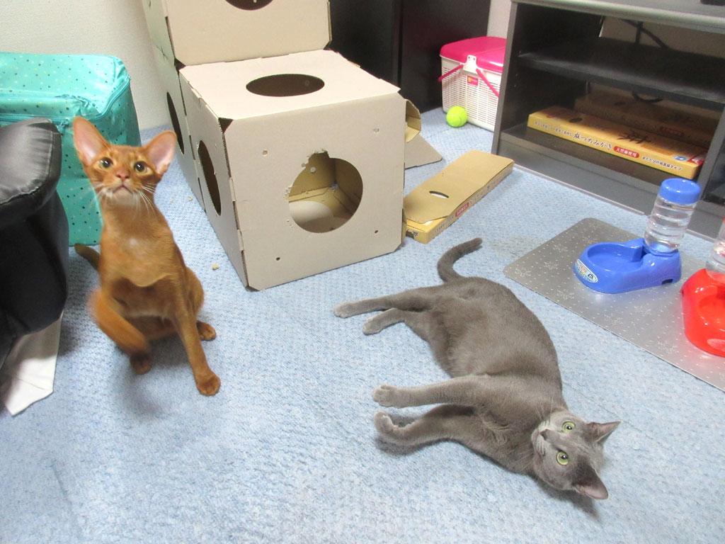 対照的な姉弟の猫たち。