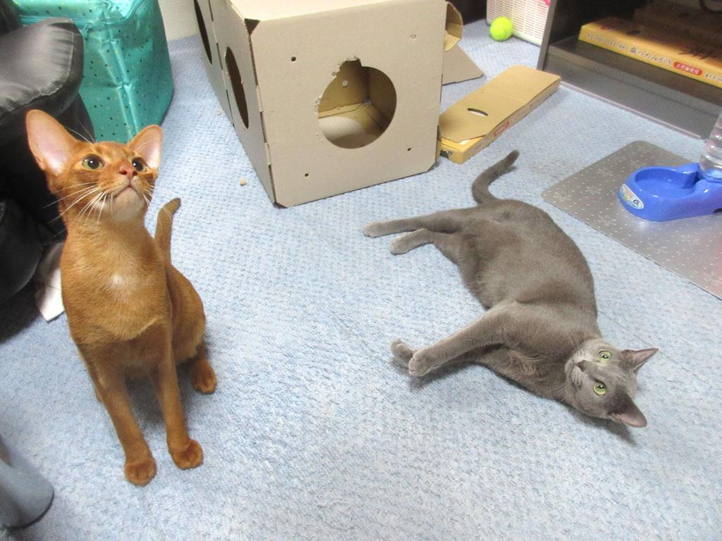 仲良さげな姉弟の猫たち。