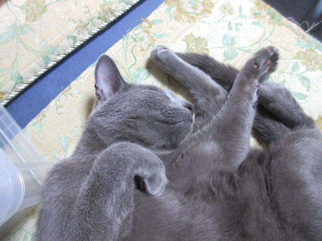 猫は嘘を付きません。