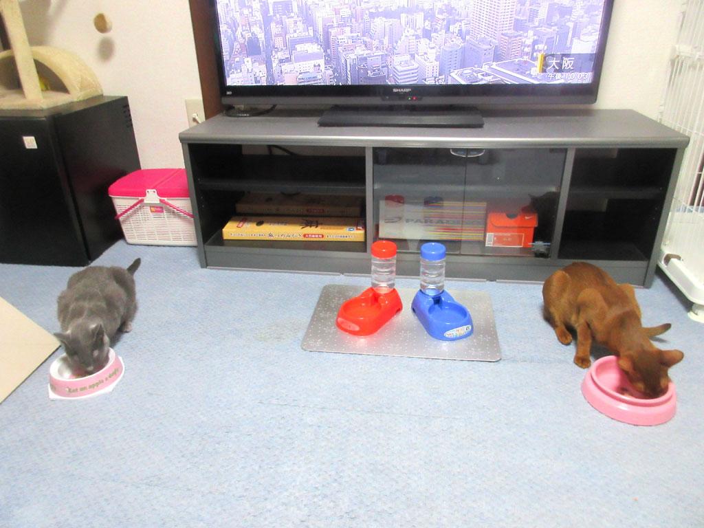我が家の猫たちの食事風景。
