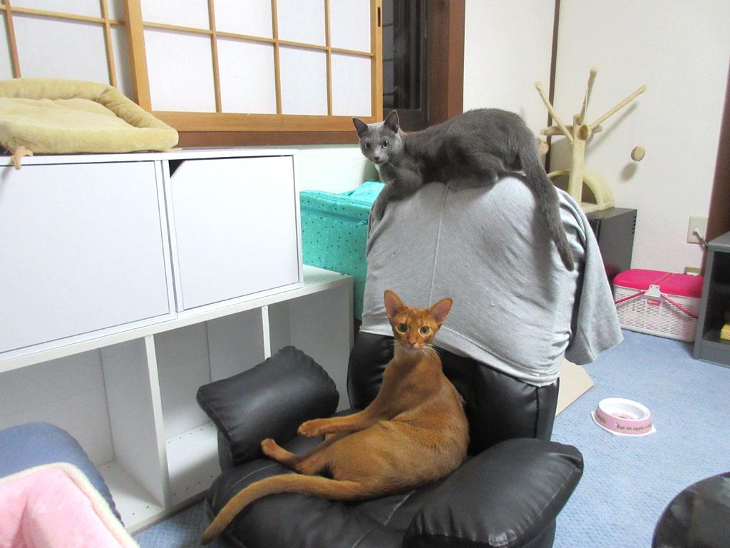 ロシ子とアビのすけの良い写真。