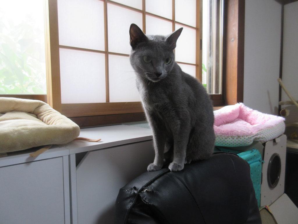 ロシ子のお気に入りの回転座椅子。