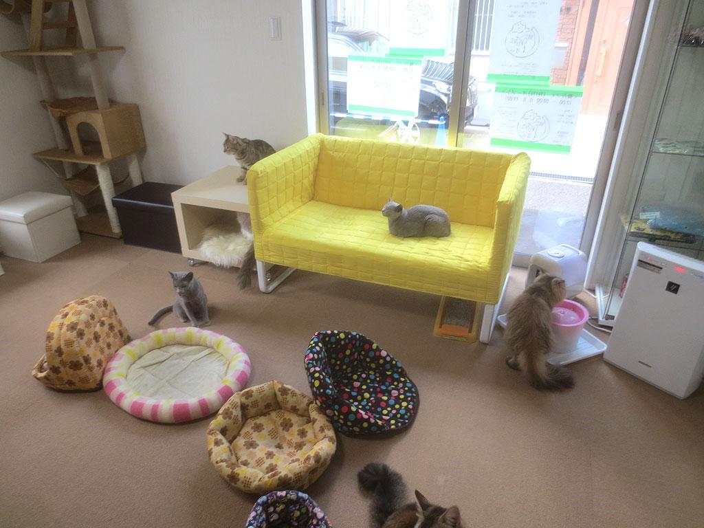 猫カフェ内の写真。