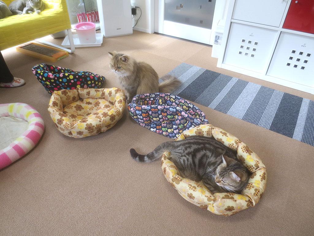 猫カフェの猫ちゃんたち。