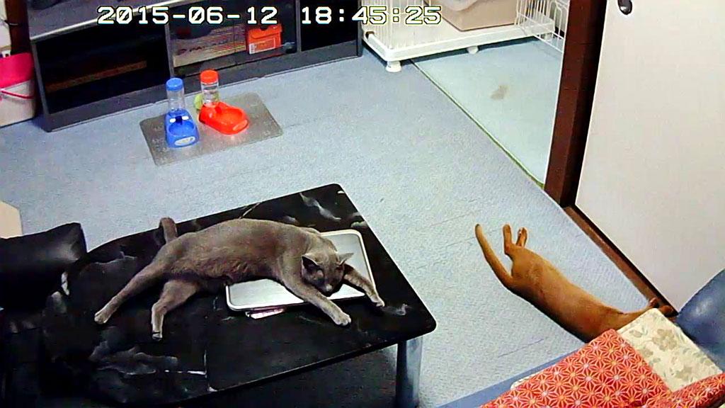 グテッとしてる猫たち。