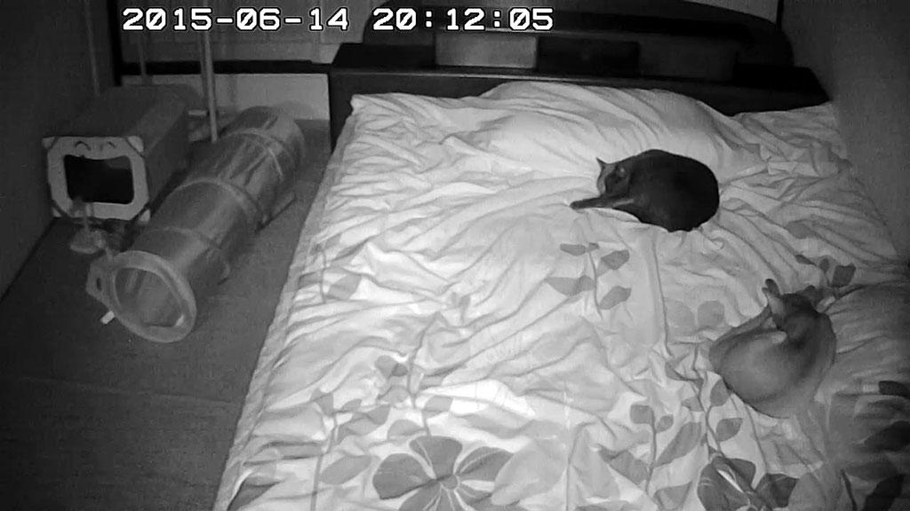 ベットの上で寝ている2にゃん。
