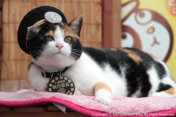 猫駅長のたまちゃん。