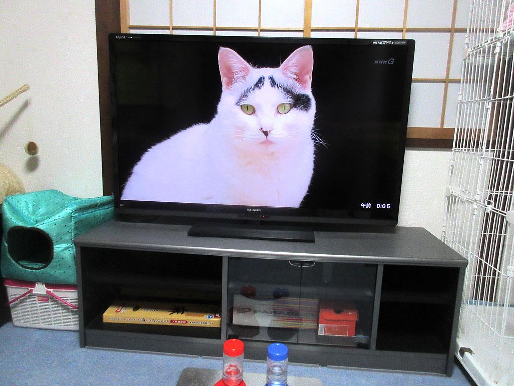 水戸の猫ちゃん「ハチ」