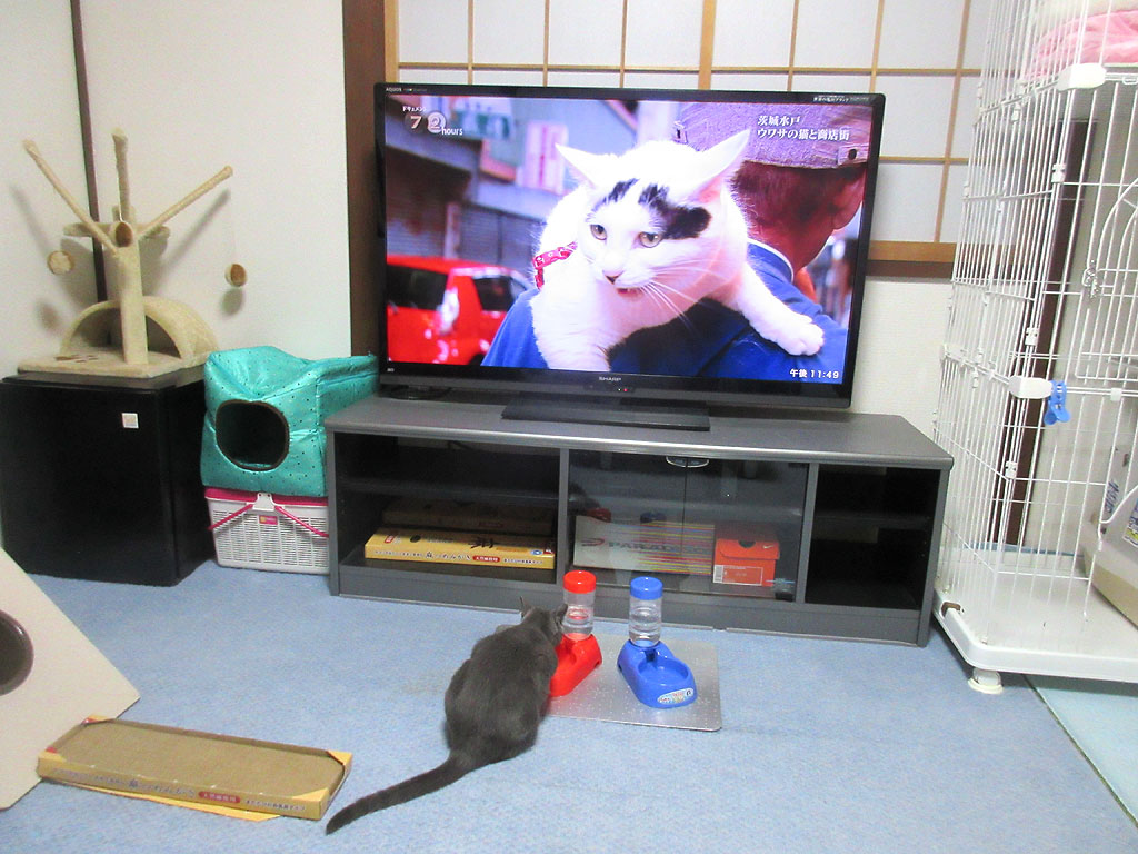 ロシ子は興味を示しません。