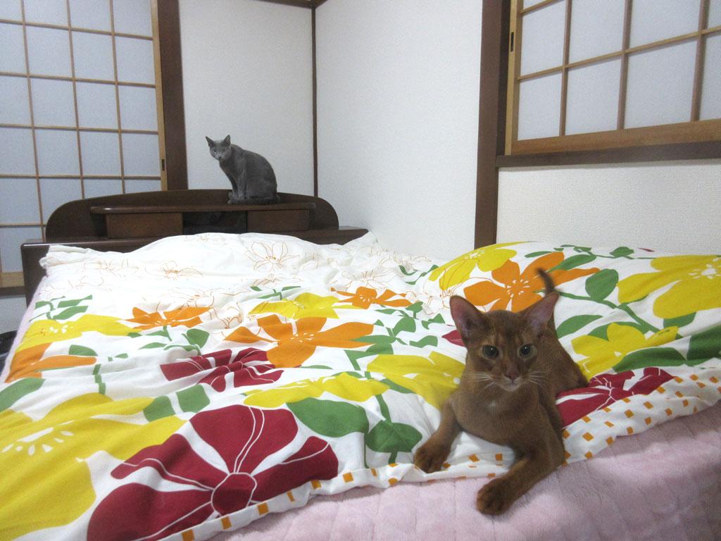 遊び終わった我が家の猫たち。