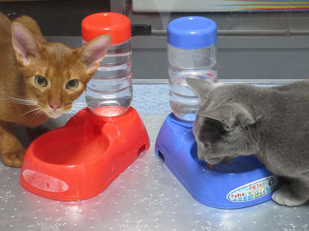 個性のある我が家の猫たち。