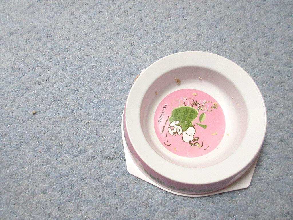 ロシ子の食後のお皿の状況。