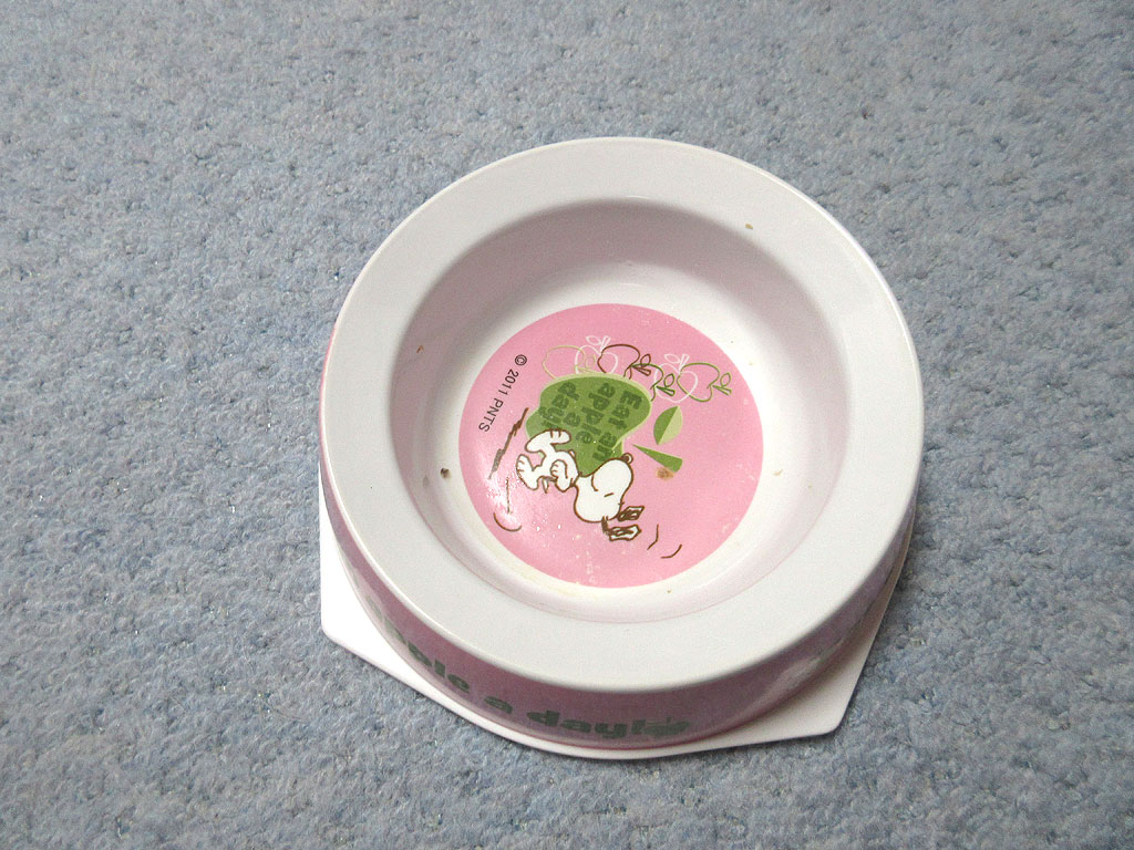 ピカピカになったロシ子のご飯のお皿。