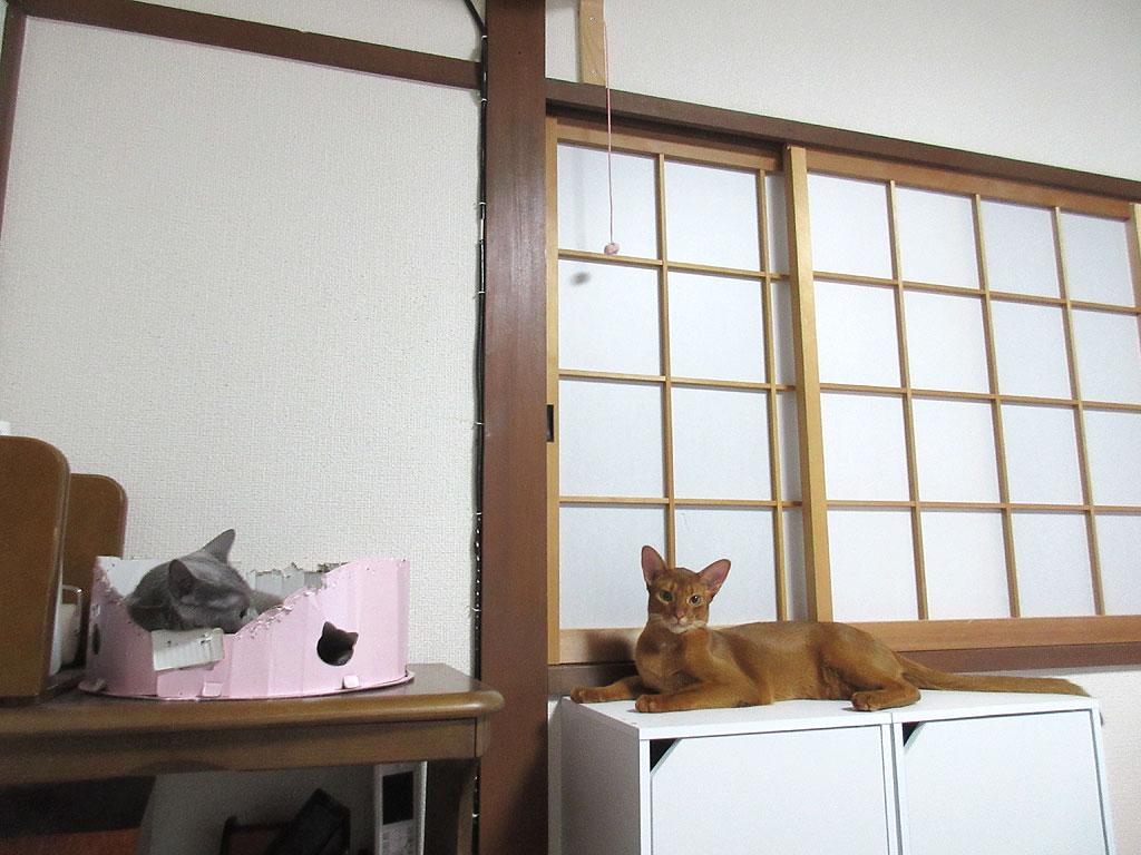 昨日の我が家の猫たち。
