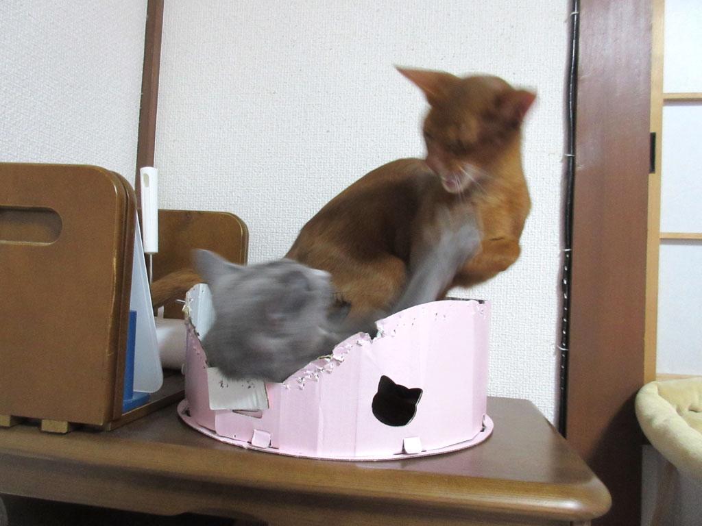 面白い関係の猫たち。