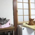 定位置の我が家の猫たち。