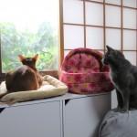 朝方の猫達。