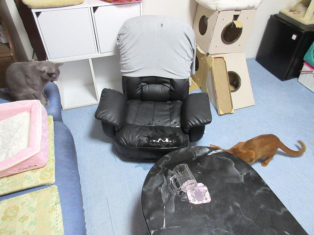 焼酎をひっくり返してくれた猫。