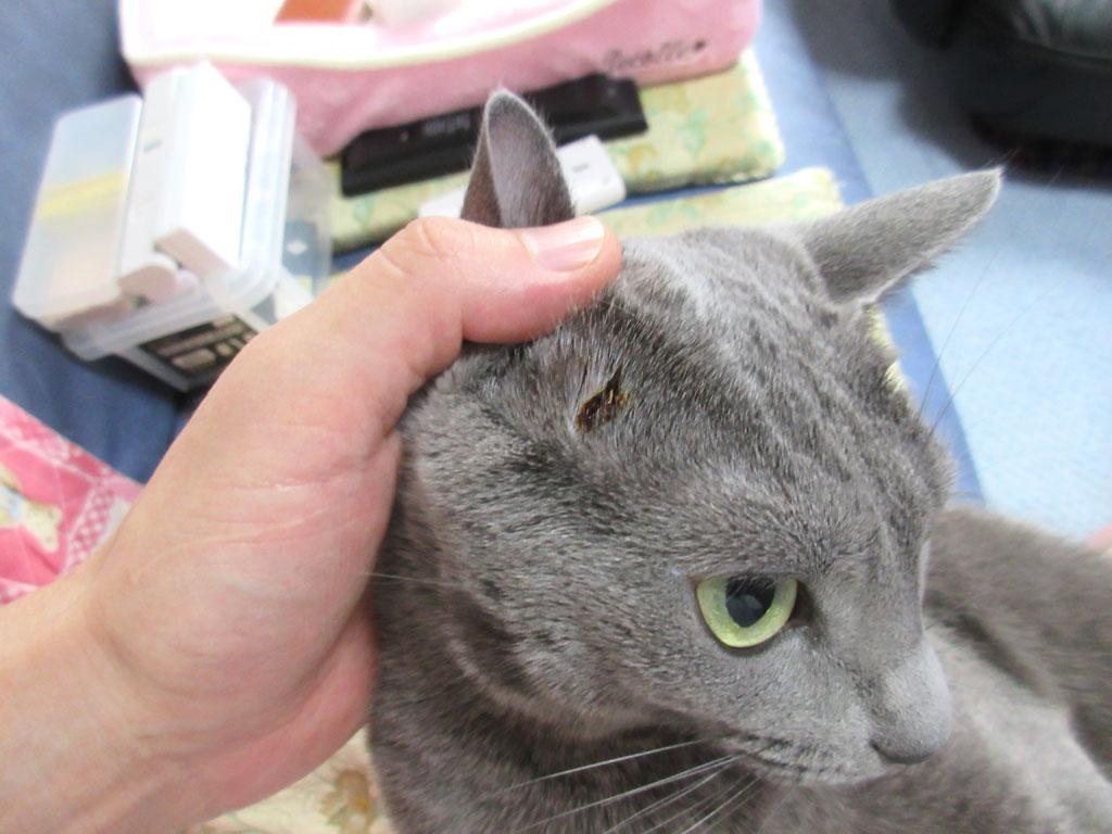 超撥水性のある猫の毛。
