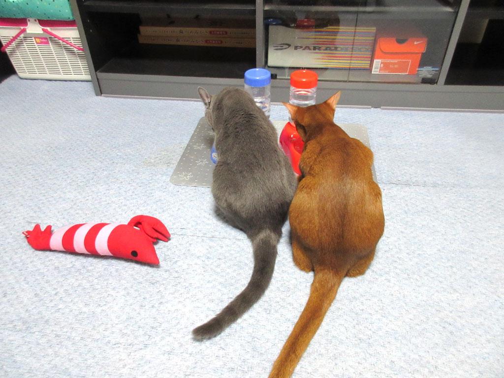 仲良しな我が家の猫達。
