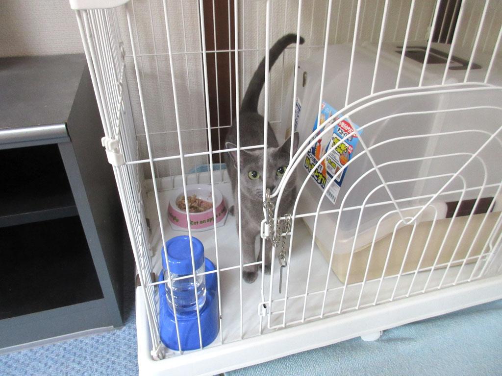 ロシ子を監禁しました。