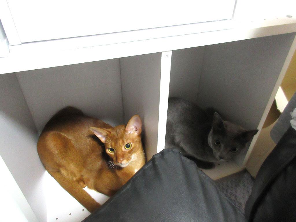 昨日の晩の我が家の猫たち。